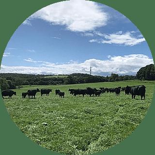 健康な牛づくりの追求